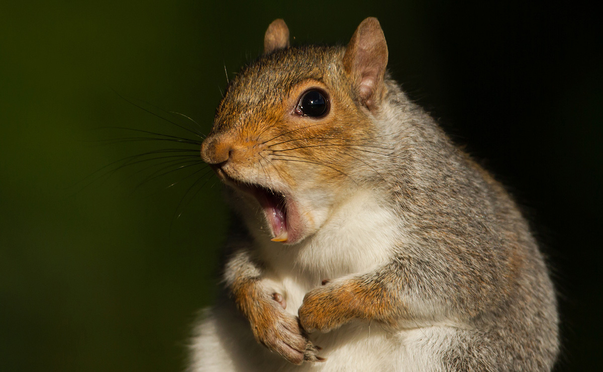 Don't be aSquirrel!